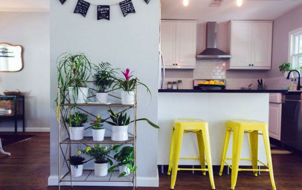 Potted_plants_interior_03