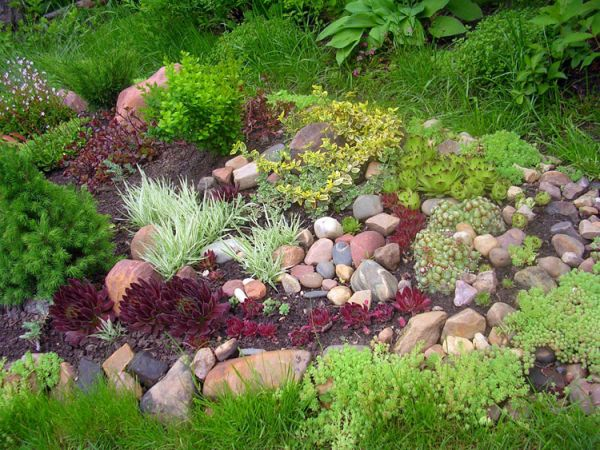 Alpine_hill_garden_05