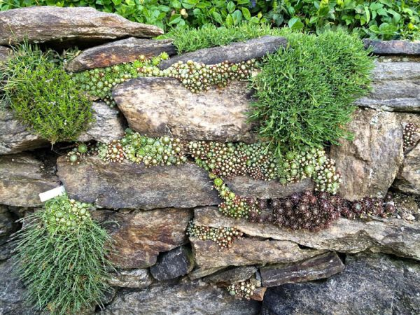 Alpine_hill_garden_07
